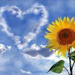 Sunflower-Delight