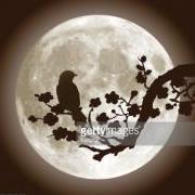 Nightigale