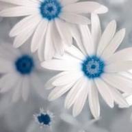 Blomstermor