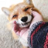 foxfloof