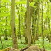 skogsvandreren