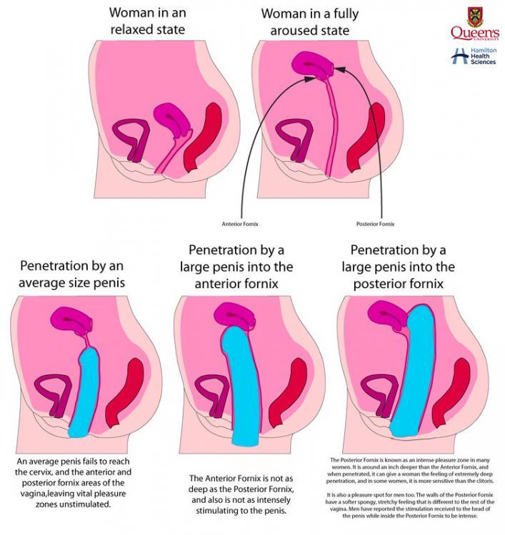 kjønn lang penis Hvordan starte lesbisk sex