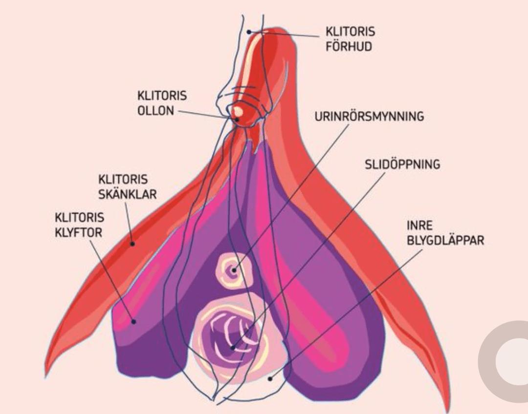 kvinneguiden forum seksualitet mini vibrator