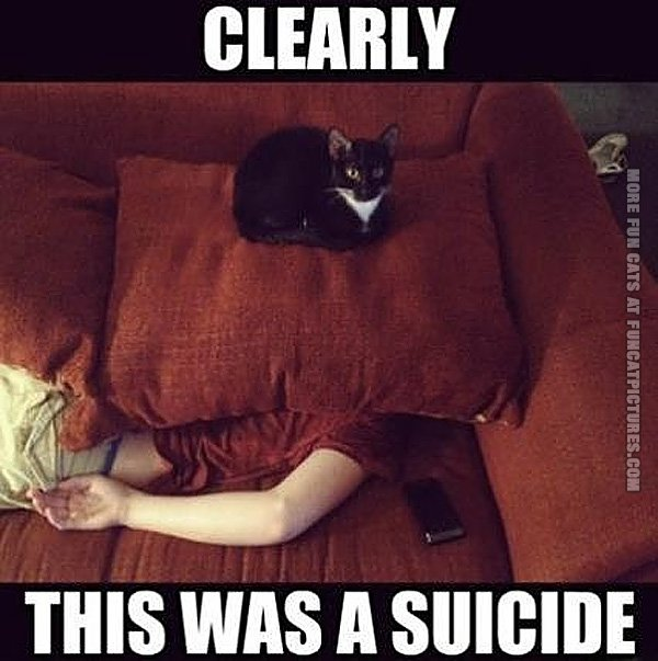 funny-cat-pics-clearly-this-was-a-suicide.jpg.1a20bc5186eb1d72a6284edda672d01d.jpg