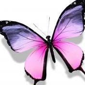 sommerfugl89