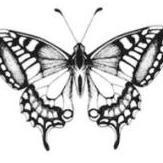 sommerfugl154