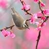 våren14